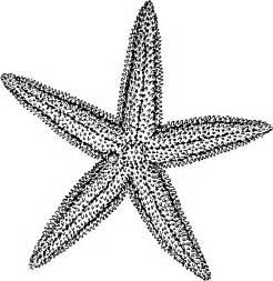 Starfish Drawing Free Clip Art