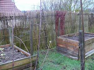 Spitzmäuse Im Garten : kraut r ben forum kologisch wertvoller sichtschutz ~ Lizthompson.info Haus und Dekorationen