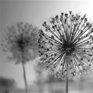 Bild Pusteblume Schwarz Weiß : bilder in schwarz jetzt motive bei myposter entdecken ~ Bigdaddyawards.com Haus und Dekorationen