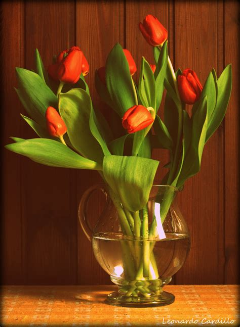 vaso per tulipani vaso di tulipani foto immagini esperimenti fotografici