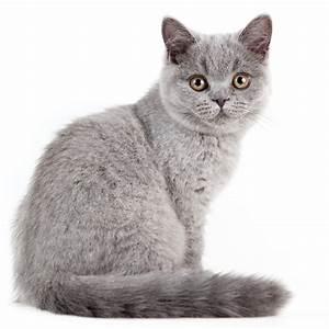 Weißer Wurm Katze : fellfarbe bei katzen das sagt die farbe ihrer katze ber ihren charakter aus ~ Markanthonyermac.com Haus und Dekorationen