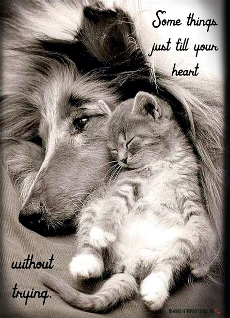 beautiful animal quotes  sayings images
