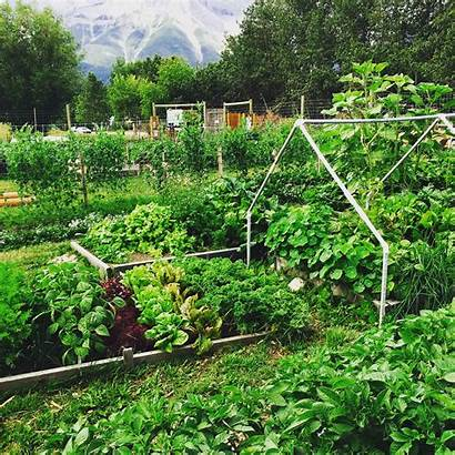 Community Gardening Canmore Growing Together Building Resilience