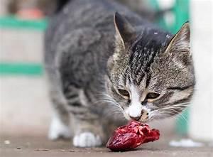 Katzen Fernhalten Von Möbeln : barfen f r katzen artgerechte ern hrung zooroyal magazin ~ Sanjose-hotels-ca.com Haus und Dekorationen