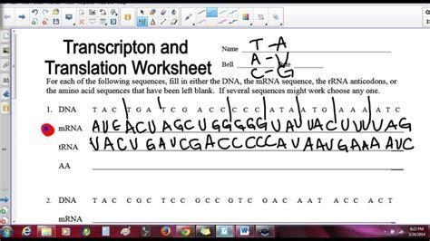 transcription and translation worksheet www imgkid
