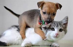 Смешные котята и щенки фото