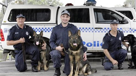 police dogs  ready  fight  crime