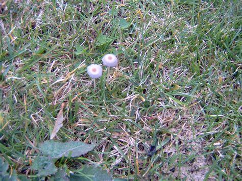 Pilze Im Garten Hund by Pilze Im Garten Und Rasen Haus Garten Forum Chefkoch De