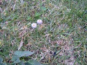 Pilze Im Garten Entfernen : pilze im garten und rasen haus garten forum ~ Lizthompson.info Haus und Dekorationen