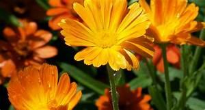 27 Types of Orange Flowers - ProFlowers Blog