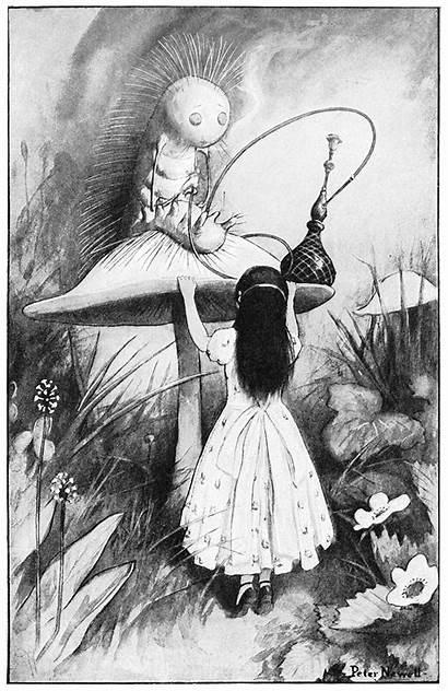 Alice Caterpillar Wonderland Illustrations Carroll Lewis Adventures