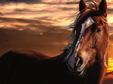 red horse  sunset picture desktop wallpaper hd
