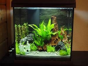 Aquarium Einrichten 60l : tetra aquaart aquarium 20 30 und 60 liter komplett set ~ Michelbontemps.com Haus und Dekorationen
