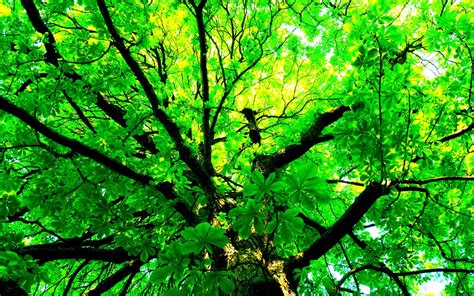Green Tree Hd Wallpaper green tree hd wallpaper hd wallpapers