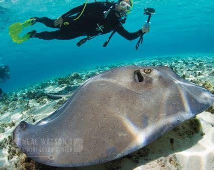 bimini big game club resort marina scuba diving