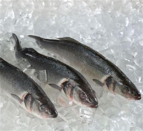 cuisiner le loup cuisiner le loup de mer 28 images le loup de mer bien