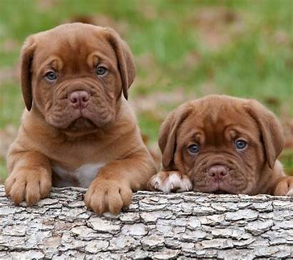 Puppies Wallpapers Background Puppy Tablet Screensavers Phone