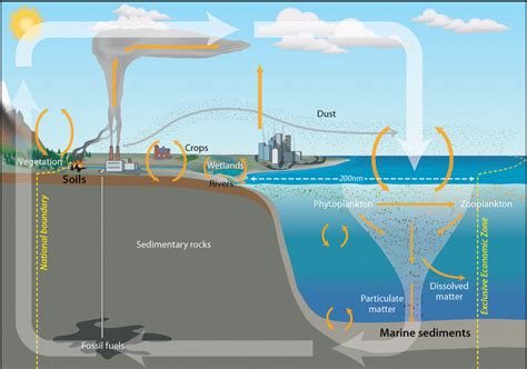 Should Carbon Stored In Marine Sediments Be Reported As