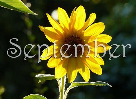September-Sunflower - Gardiner Street Parish