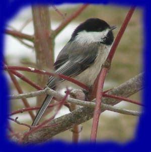 how birds find food in winter