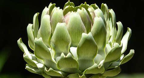 alimenti per depurare i reni 9 erbe depurative ideali per depurare fegato e reni