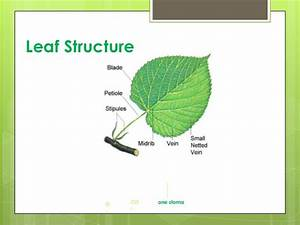 Plant structure function and transport