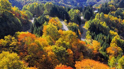 Nagano Forest - Bing Wallpaper Download