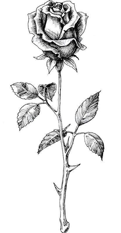 Pin by Rashod on Tattoos   Rose drawing tattoo, Flower tattoo drawings, Tattoo drawings