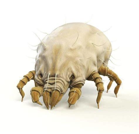 acaro materasso un materasso contro gli acari e le allergie tra le