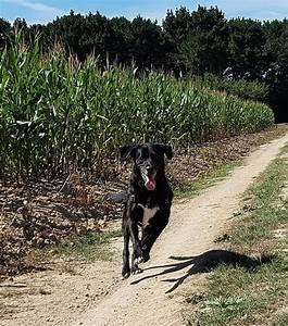 Croquettes, hill 's Science Plan pour chien - zooplus
