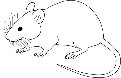 Vector Diagram Of Laboratory Mouse (black And White