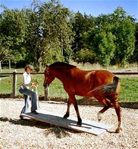 bodenarbeit mit ihrem pferd auf dem grubhof