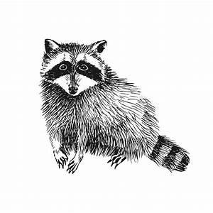 Hand drawn raccoon stock vector. Image of cartoon, racoon ...