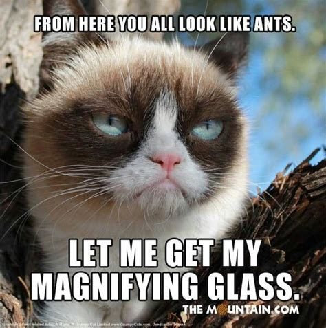 Tard The Cat Meme - 1000 images about tard grumpy cat on pinterest