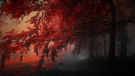 Here you can find the best android dark wallpapers uploaded by our community. Red Autumn Trees In The Forest HD Dark Aesthetic Wallpapers | HD Wallpapers | ID #45574