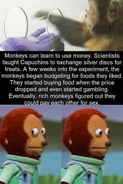 Monkey Stonks Memes Goes Meme Biz Formidable