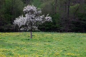 Baum Pflanzen Anleitung : kirschbaum pflanzen die wichtigsten pflanztipps ~ Frokenaadalensverden.com Haus und Dekorationen