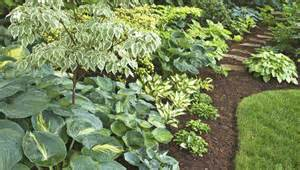 Ceiling Border Trim by Easy Ways To Use Hostas