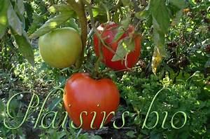 Planter Graine Tomate : semer des graines de tomates bio ~ Dallasstarsshop.com Idées de Décoration