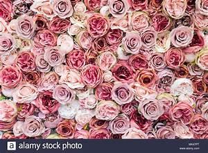 Nuance De Rose : mur de roses dans diff rentes nuances de rose background ~ Melissatoandfro.com Idées de Décoration