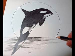 Killer Whale clipart pencil drawing - Pencil and in color ...