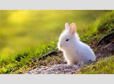 Cómo cuidar a un conejo toy en 7 pasos