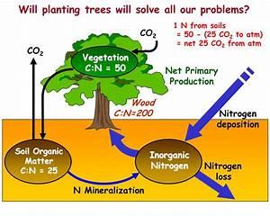 Index Of   Globalchange1  Current  Lectures  Kling  Nitrogen Cycle
