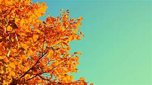 Wallpaper, Tree, 5k, 4k, Wallpaper, Sky, Autumn, Yellow
