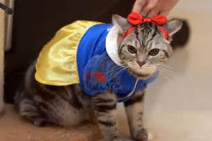costume for cats pet costumes for dogs and cats