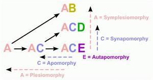 Palaeos Systematics  Cladistics  Phylogenetic Systematics