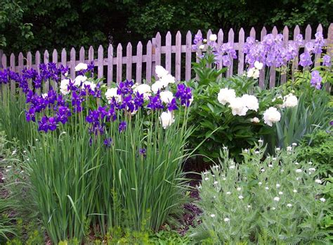 iris companion plants gardener s guide on companion