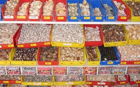 florida shell shop  treasure island buy discount