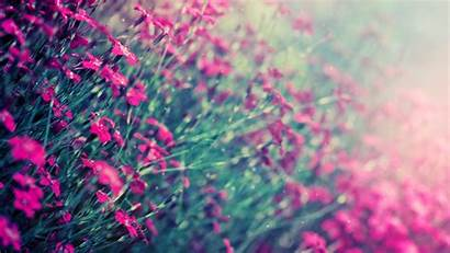 Teal Pink Source