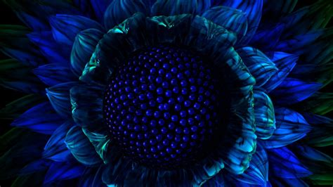 girasol azul   fondos de pantalla  wallpapers